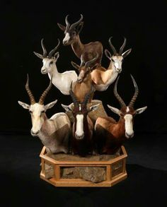 Taxidermy Decor, Taxidermy Display, Deer Mounts, Antler Art, Trophy Hunting, Trophy Rooms, Deer Skulls, Turkey Hunting, African Animals