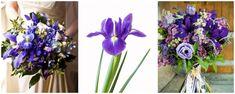 buchete cu irisi mov - flori in culoarea anului 2018 - ultraviolet Iris, Plants, Plant, Bearded Iris, Planets, Irises