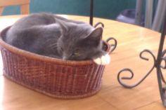cat or fruit hmmmmm!!!111111