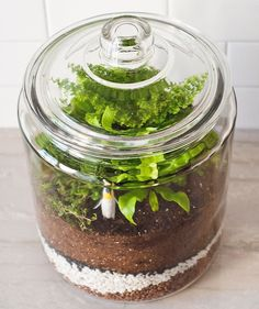 How to Make a Closed Terrarium is part of Living Room Plants Terrarium - Looking for an easy way to add a splash of green to your home decor See how Kim and Scott Vargo of Yellow Brick Home make a stylish closed terrarium Indoor Garden, Indoor Plants, Outdoor Gardens, Garden Terrarium, Succulent Terrarium, Terrarium Ideas, Terrarium Closed, Glass Terrarium, Hanging Terrarium