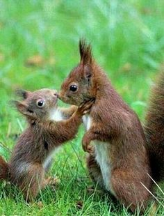 There are lots of squirrel like mammals like the ground hog, gopher as well as prairie dog. When it comes to foods, what do squirrel love to eat? Cute Baby Animals, Animals And Pets, Funny Animals, Animals Kissing, Animal Babies, Wild Animals, Beautiful Creatures, Animals Beautiful, Cute Squirrel