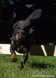 BATDOG swooping in to save the day!