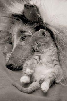 yavru kedi ve köpek - Google'da Ara