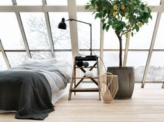 –Clean room with a little tree & big windows.