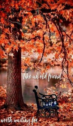 Fall/Autumn - Like An Old Friend Worth Waiting For