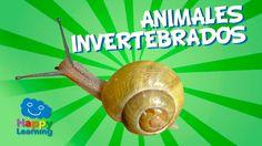 Animales Invertebrados | Videos Educativos para Niños
