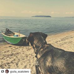#Repost @giulia_scatolero  We like very much this mix between river and sea  #trasimenolake is beautiful even if  #passignano is a  very dirty city   Stay tuned!  #huskymix #huskygram #dogoftheday #friendlypets #dogscorner #tagsta_nature #happy_pet #cutepetclub #animalsofinstagram #doglover #puppylove #dogofficialdog #puppyofficial #instadog  #puppiesinstapics #dogsandpals #mydogiscutest #petfancy #instadog #petsagram #dogs_of_instagram #instagramdogs #feature4huskies #tongueouteveryday…
