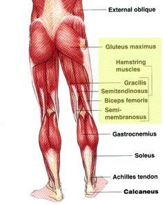 posterior chain, glute max, anterior pelvic tilt correction for less back pain
