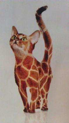 amo girafas e gatos tbm, então este está perfeito hhehehe
