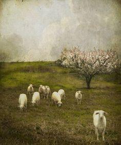 birdcagewalk:windypoplarsroom:Jamie Heiden (American photographer)