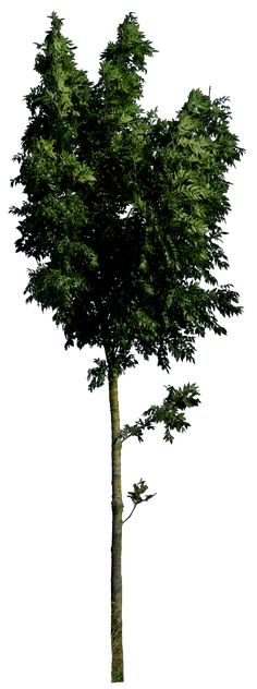 Tree 54 HQ png by gd08.deviantart.com on @deviantART