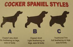 how to cut hair on cocker spaniel - Google Search