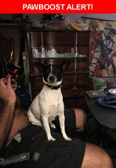 Is this your lost pet? Found in Los Angeles, CA 90032. Please spread the word so we can find the owner!  Description: Black leather collar, female, 8-10lbs  Nearest Address: 4833 Farquhar Street, Los Angeles, CA, United States