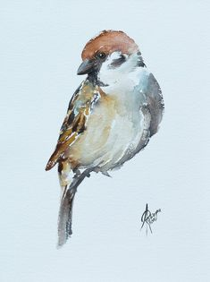 Watercolor Bird, Watercolor Paintings, Watercolours, Painting Art, Sparrow Art, Bird Sketch, Paintings For Sale, Art Tutorials, Lovers Art