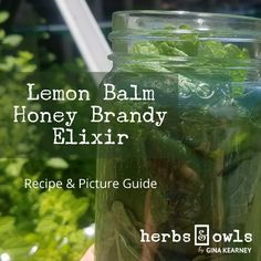 Here's a Lemon Balm Honey Brandy Elixir recipe I made. You can use this recipe with any aromatic leaves or flowers - go out and experiment with nature! Brandy Recipe, Health Care Reform, Aromatic Herbs, Lemon Balm, Experiment, Herbalism, Honey, Leaves