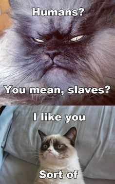 Funny pictures about Sinister Cat Meets Grumpy Cat. Oh, and cool pics about Sinister Cat Meets Grumpy Cat. Also, Sinister Cat Meets Grumpy Cat. Grumpy Cat Quotes, Gato Grumpy, Funny Grumpy Cat Memes, Funny Animal Jokes, Cute Funny Animals, Funny Animal Pictures, Funny Cute, Grumpy Kitty, Funny Memes