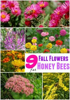 9 Fall Flowers for Bees to Help them Overwinter I've always enjoyed gardening both for what I grow to feed my family and what I can offer back to feed the wildlife. Since humans expand their territory more and more, we are taking away land that wildlife u Honey Bee Flowers, Best Flowers For Bees, Flowers To Attract Bees, Love Garden, Perrinial Garden, Garden Trellis, Glass Garden, Save The Bees, Fall Flowers