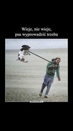 Wtf Funny, Funny Memes, Hilarious, Animal Memes, Funny Animals, English Memes, Happy Photos, Funny Bunnies, Really Funny
