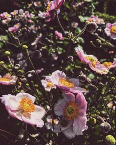 #flower #spring #pink #graden #sun
