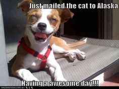 LOOOOL, this reminds me of Aristocats, You are going to Timbaktu, if it's the last thing I dooooo ~ Just mailed the cat to Alaska. Having an awsome day!!!  LOL!! #dog #humor #funny