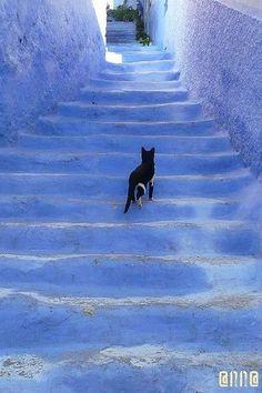 どこまでも続く青い階段を猫にいざなわれて上ってゆけば、お伽の国に迷い込んでしまいそう。