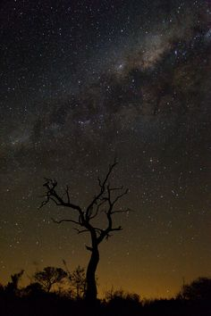 Portrait image of the milky way