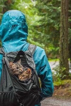 Τα γατάκια που σώθηκαν από το δρόμο και πήγαν για περιπέτειες στα βουνά και άλλα υπέροχα viral της εβδομάδας