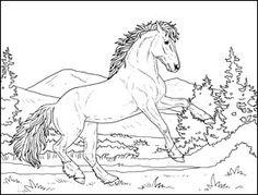 The 8 Best Beautiful Horses By Amanda Neel Images On Pinterest