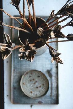 Dried Siberian iris seed pods
