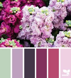 { flora hues } image via: @peoniesncream