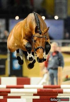 Strong independent horse that doesn't need no rider