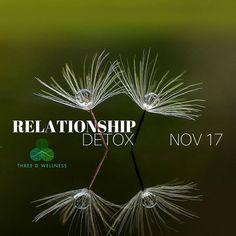 Learn the signs of a bad relationship whether it's at work with friends or a significant other and how to free yourself. Toxic relationships can affect us mentally and physically. Sign up for this class using the link in our bio.  #mentalhealth #selflove #selfhelp #advice #tuesday #relationship #toxicpeople #georgia #atlanta #alpharetta #roswellga #november #depression #heathcoach #lifecoach #wellbeing #empower #empowerment #freeyourself #living #lifestyle #instahealth #instagood…