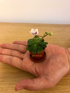 African Violet Peppermint Girl Tiny