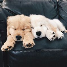 Sweet Golden Retriever Puppy - Cats and Dogs House Cute Baby Animals, Animals And Pets, Funny Animals, Nature Animals, Funny Pets, Beautiful Dogs, Animals Beautiful, Majestic Animals, Cute Dogs And Puppies
