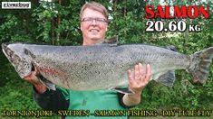 Storlax med RiverBug tubfluga - Esa catch this massive female salmon with his own DIY tube fly tied in RiverBug sleeve! #matkakoski #sweden #torneälv #tornionjoki #tornio #korpikylä #putkiperhot #perhonsidonta #lohiperhot #lohenkalastus #saalisklubi #miniperhot #mustaperho #salmon #salmonfinland #kalastus #fishingfinland #tubefly #tubfluga #tubefluer #tubenfliegen #lachs #lax #lohi #salmon #bigfish #bigsalmon #mustakettu #esanerikoinen #laks #oulu #ouluperhonsidonta #riverbugfinland #shop…