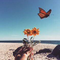 Perhaps the butterfly is proof that you can go through a great deal of darkness yet become something beautiful. ☺️🐛🌿🌻🌞 @goodjujutribe