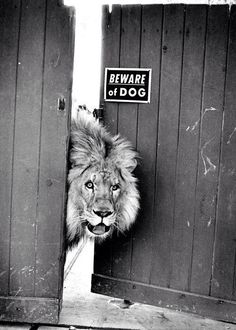 I would get a beware of kitty sign instead or a beware of bunny so they'll be scared when they see a lion lol