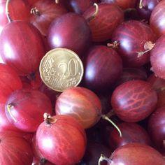 ... } on Pinterest | Gooseberry pie, Cape gooseberry and Gooseberry jam