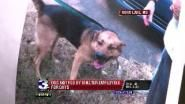 Horn Lake  Mississippi ~ DOG NOT FED FOR DAYS AT SHELTER ~ A Horn Lake Animal Shelter employee says she was told to not feed a dog to curb aggression
