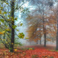 November 11-én pénteken ködös reggelre ébredtünk. Munka előtt készítettem is néhány képet a telefonommal az Erzsébet-kertben.   Szombat reg...