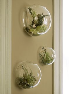 Air plants on the wall. A great way to add life and elegance to a room without too much maintenance needed.