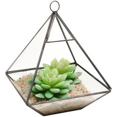 Hanging Clear Glass Prism Air Plant Terrarium Tabletop Succulent... (€27) ❤ liked on Polyvore featuring home, home decor, plants, fillers, decor, candles, clear glass planter, succulent planter, patio planters and succulent plant terrarium