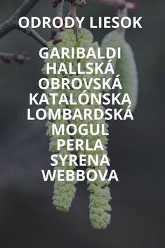 Obchod s aloe vera v Bratislave Bratislava, Facebook Sign Up, Aloe Vera