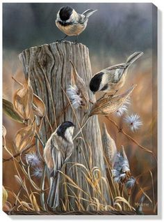 This Autumn Black-Capped Chickadees Wrapped Canvas Art features a beautiful painted scene of three chickadees sitting on a fence post in the middle of a field. The wrapped canvas design gives a unique Bird Pictures, Watercolor Bird, Wildlife Art, Bird Art, Beautiful Birds, Pet Birds, Original Paintings, Canvas Art, Art Prints