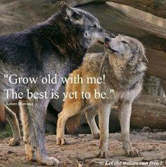 Alina and Vasile. the Grey Wolves Series by Quinn Loftis ♡