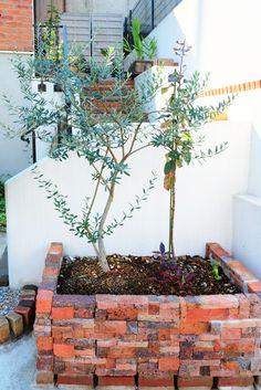 植え替えたオリーブとりんごの木 2015.10.18
