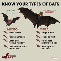Facts of Bats by Nitin SomduttDhirsingh Walmiki (Eco-Echo) Types Of Animals, Animals Of The World, Animals And Pets, Wild Animals, Bat Animal, Mundo Animal, Animal Room, Bat Species, Animal Species