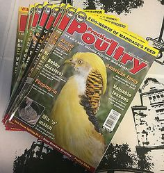 Practical Poultry Magazine-Chicken-Ducks-Game-Goose-Quail-Rabbits-#37-45-2007 Pet Supplies:Poultry & Waterfowl #forcharity