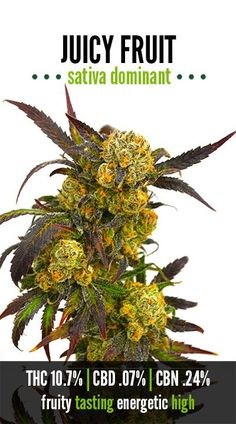 Juicy Fruit, by The Green Solution