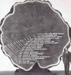 Life Of a Tree From 550 To 1891 - Sad that the life of this tree ended after all it had survived